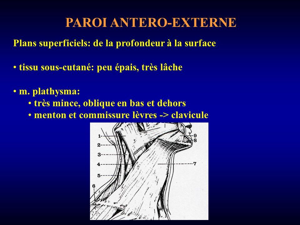 PAROI ANTERO-EXTERNE Plans superficiels: de la profondeur à la surface tissu sous-cutané: peu épais, très lâche m.