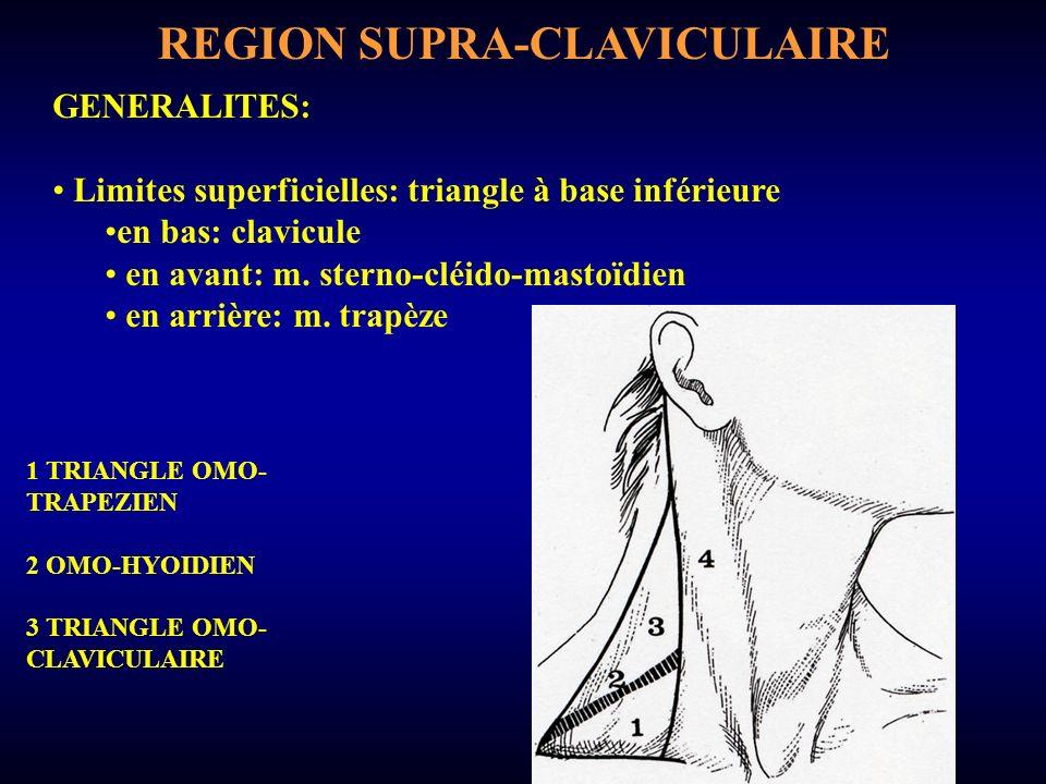 REGION SUPRA-CLAVICULAIRE GENERALITES: Limites profondes: en bas: 1ère côte (orifice supérieur du thorax) en arrière: m.