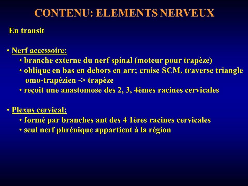 CONTENU: ELEMENTS NERVEUX En transit Nerf accessoire: branche externe du nerf spinal (moteur pour trapèze) oblique en bas en dehors en arr; croise SCM, traverse triangle omo-trapézien -> trapèze reçoit une anastomose des 2, 3, 4èmes racines cervicales Plexus cervical: formé par branches ant des 4 1ères racines cervicales seul nerf phrénique appartient à la région