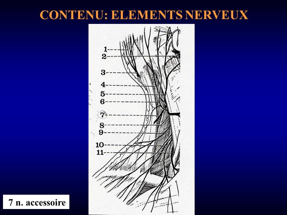 CONTENU: ELEMENTS NERVEUX 7 n. accessoire
