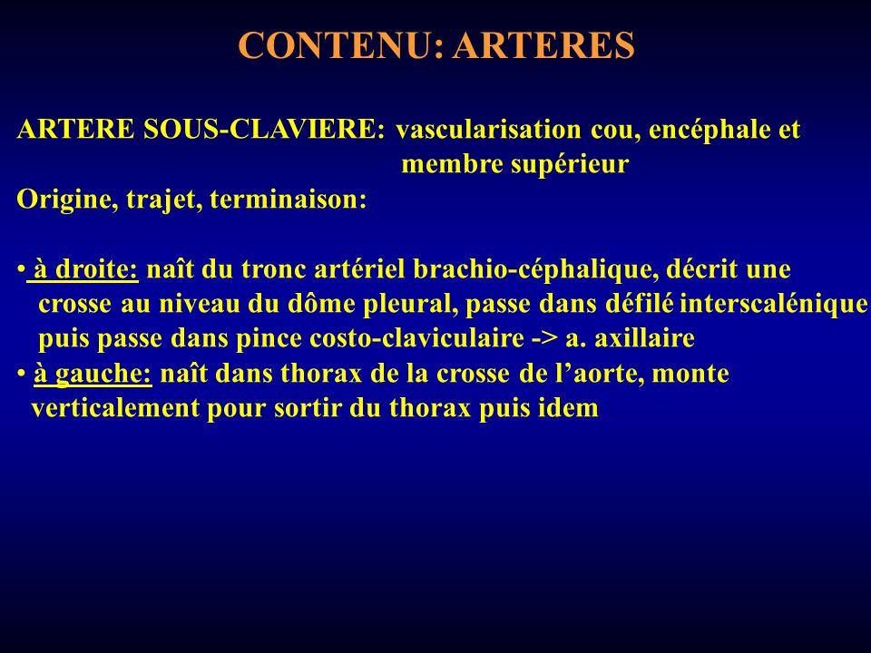 CONTENU: ARTERES ARTERE SOUS-CLAVIERE: vascularisation cou, encéphale et membre supérieur Origine, trajet, terminaison: à droite: naît du tronc artériel brachio-céphalique, décrit une crosse au niveau du dôme pleural, passe dans défilé interscalénique puis passe dans pince costo-claviculaire -> a.