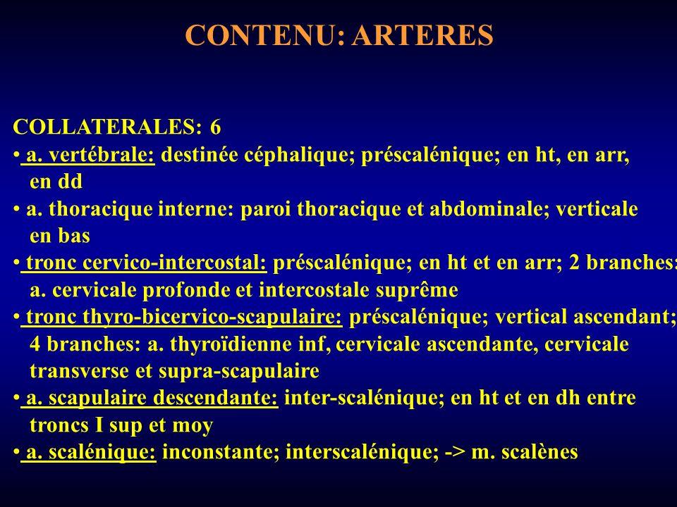 CONTENU: ARTERES COLLATERALES: 6 a.