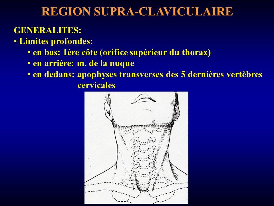 PAROI INFERIEURE Forme triangulaire; essentiellement osseuse en avant et en dehors: face supérieure clavicule (insertion interne SCM, insertion externe trapèze) SCM trapèze