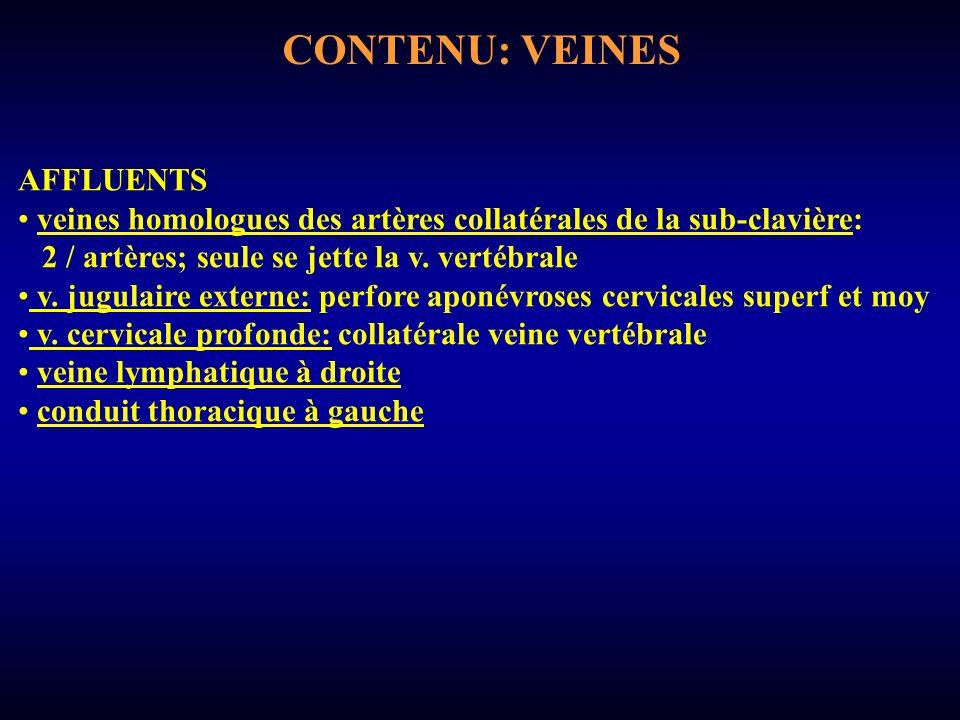 CONTENU: VEINES AFFLUENTS veines homologues des artères collatérales de la sub-clavière: 2 / artères; seule se jette la v.