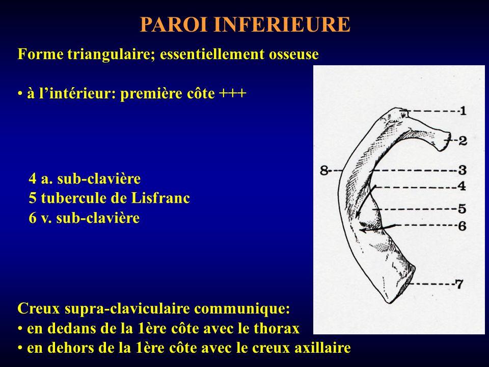 PAROI INFERIEURE Forme triangulaire; essentiellement osseuse à lintérieur: première côte +++ Creux supra-claviculaire communique: en dedans de la 1ère côte avec le thorax en dehors de la 1ère côte avec le creux axillaire 4 a.