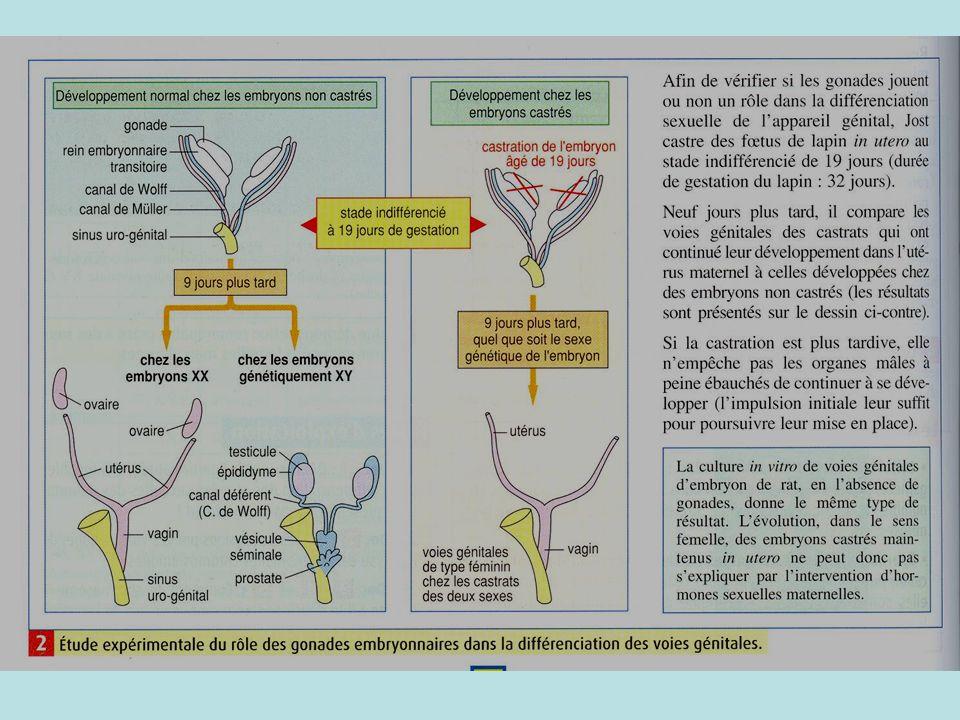 2°)- Du sexe gonadique au sexe phénotypique : la mise en place des appareils génitaux Activité 3 pages 274/275