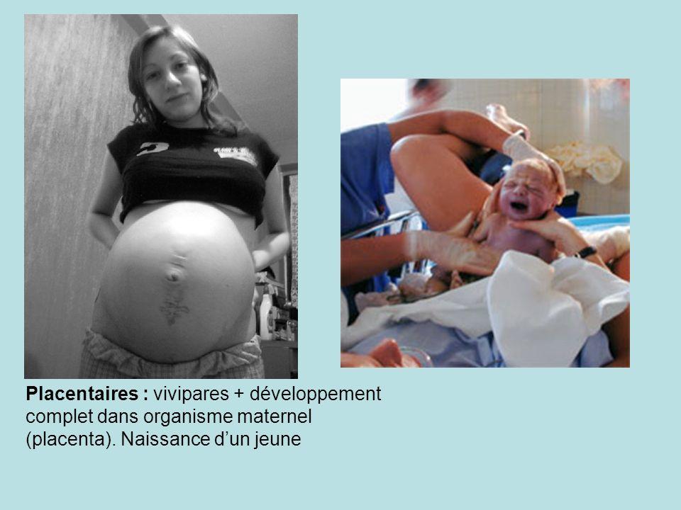 Placentaires : vivipares + développement complet dans organisme maternel (placenta).