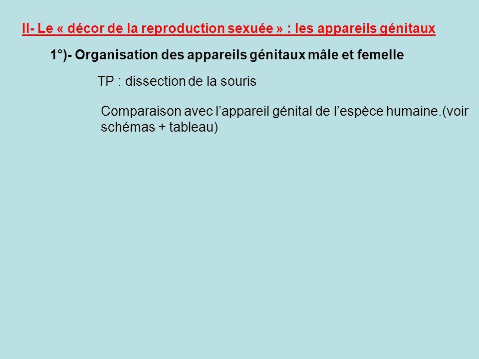 II- Le « décor de la reproduction sexuée » : les appareils génitaux 1°)- Organisation des appareils génitaux mâle et femelle TP : dissection de la souris Comparaison avec lappareil génital de lespèce humaine.(voir schémas + tableau)