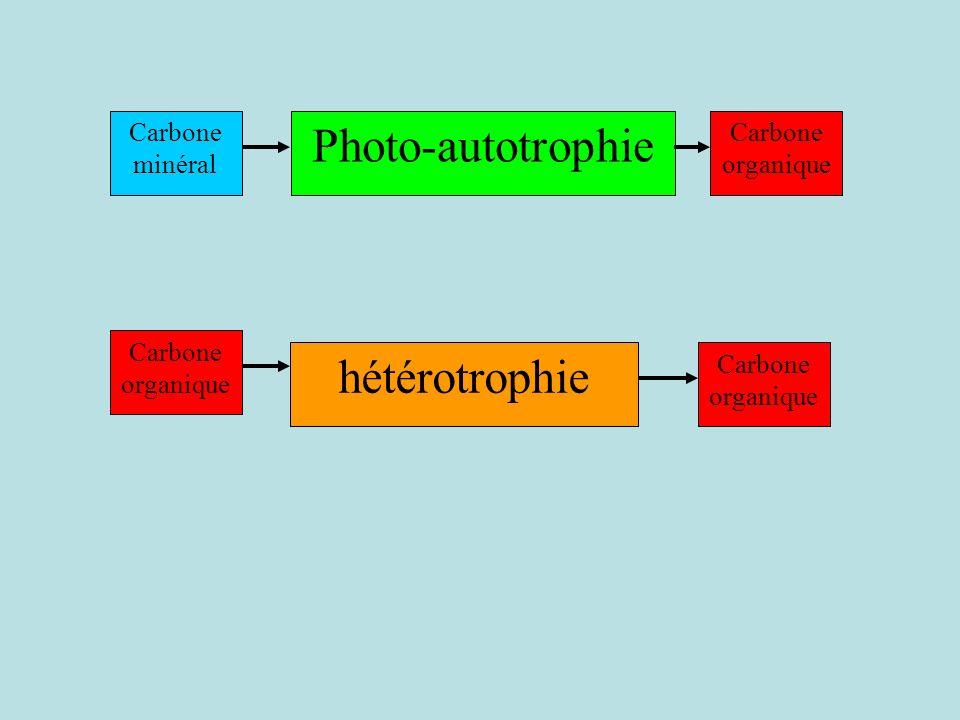 Photo-autotrophie Carbone organique Carbone minéral hétérotrophie Carbone organique