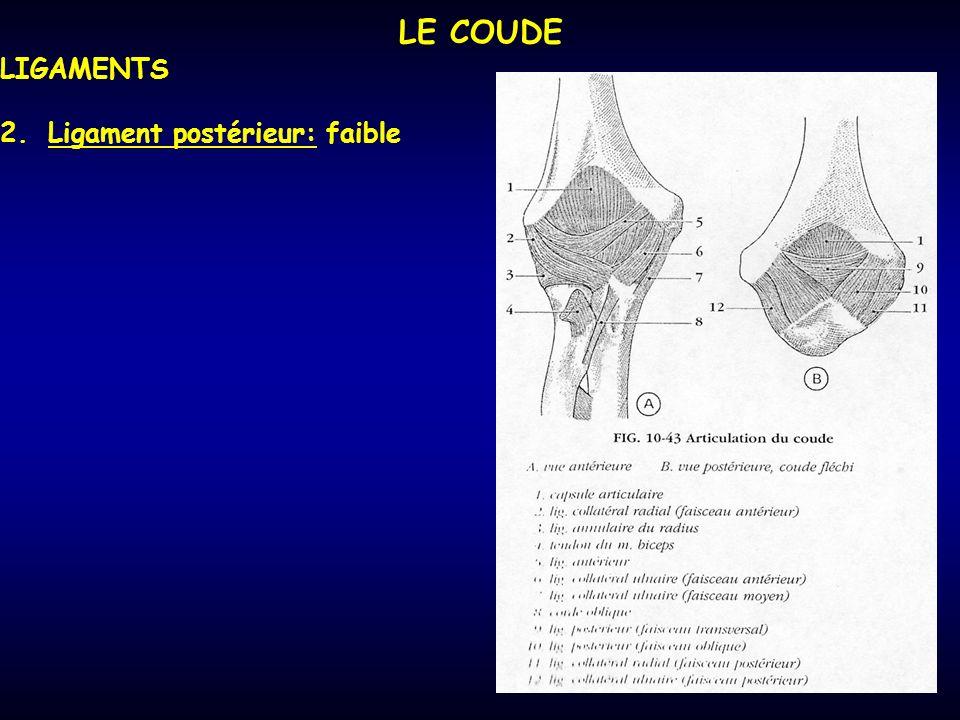 LE COUDE LIGAMENTS 2.Ligament postérieur: faible