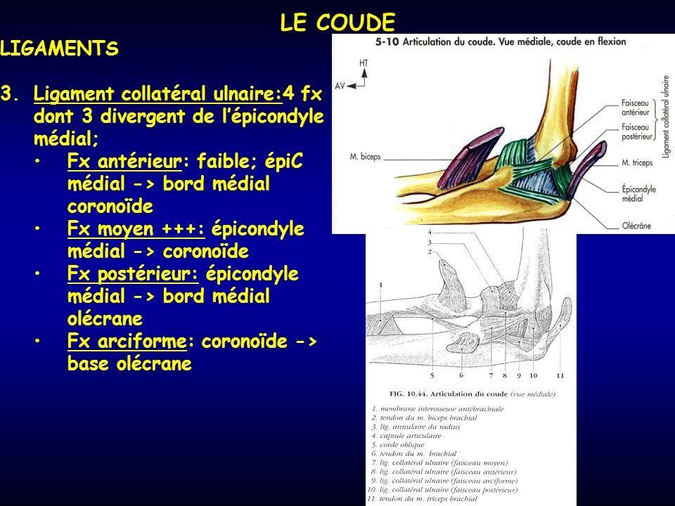 LE COUDE LIGAMENTS 3.Ligament collatéral ulnaire:4 fx dont 3 divergent de lépicondyle médial; Fx antérieur: faible; épiC médial -> bord médial coronoïde Fx moyen +++: épicondyle médial -> coronoïde Fx postérieur: épicondyle médial -> bord médial olécrane Fx arciforme: coronoïde -> base olécrane