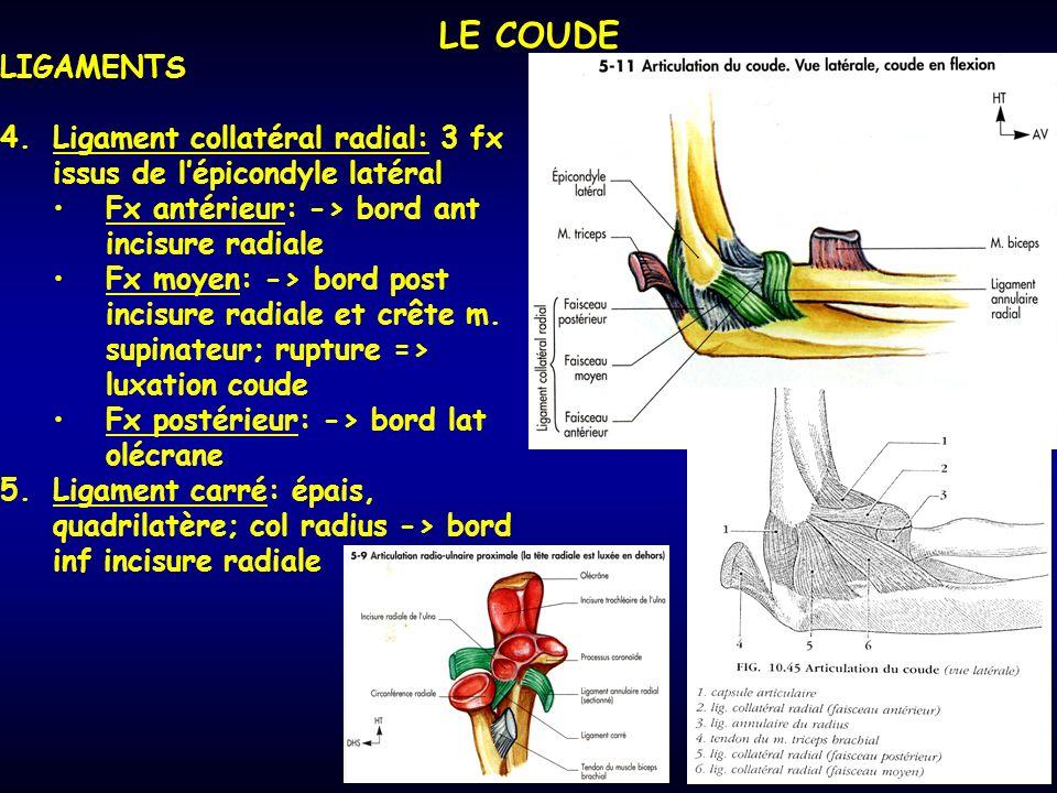 LE COUDE LIGAMENTS 4.Ligament collatéral radial: 3 fx issus de lépicondyle latéral Fx antérieur: -> bord ant incisure radiale Fx moyen: -> bord post incisure radiale et crête m.