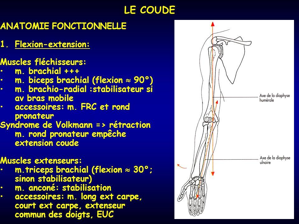 LE COUDE ANATOMIE FONCTIONNELLE 1.Flexion-extension: Muscles fléchisseurs: m. brachial +++ m. biceps brachial (flexion 90°) m. brachio-radial :stabili
