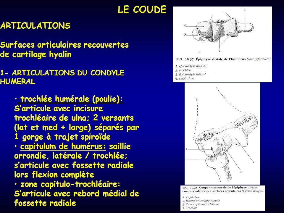 LE COUDE ARTICULATIONS Surfaces articulaires recouvertes de cartilage hyalin 1- ARTICULATIONS DU CONDYLE HUMERAL trochlée humérale (poulie): Sarticule avec incisure trochléaire de ulna; 2 versants (lat et med + large) séparés par 1 gorge à trajet spiroïde capitulum de humérus: saillie arrondie, latérale / trochlée; sarticule avec fossette radiale lors flexion complète zone capitulo-trochléaire: Sarticule avec rebord médial de fossette radiale