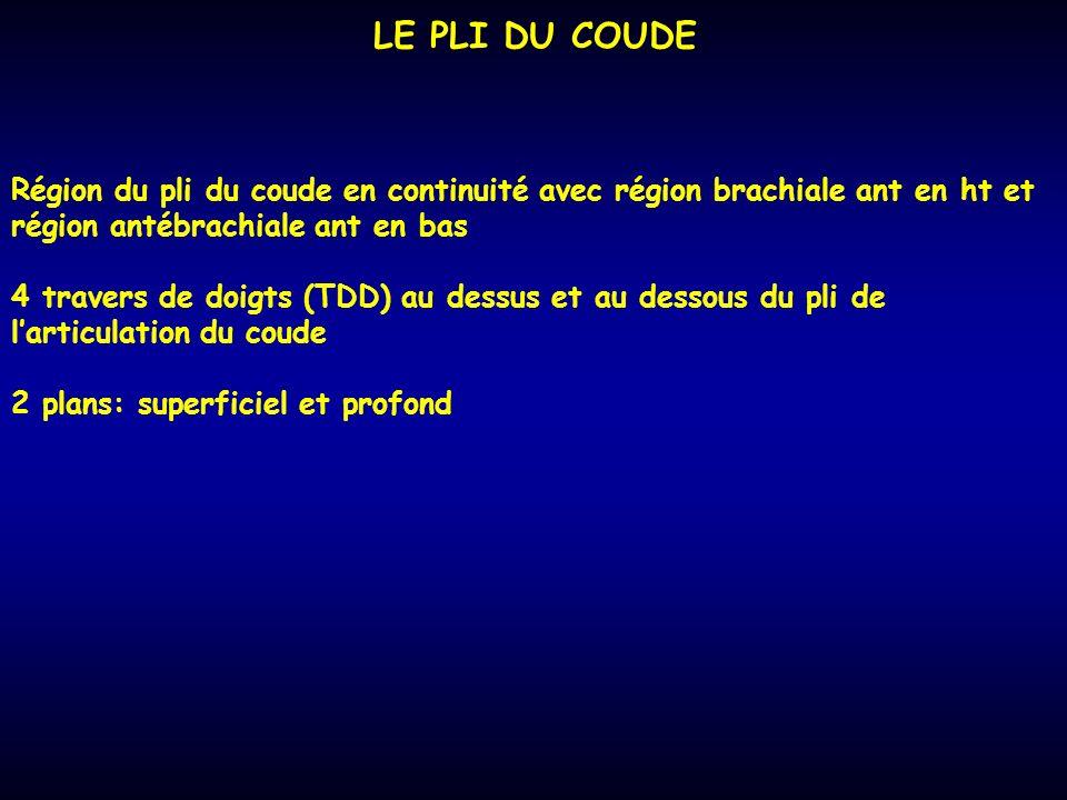 LE PLI DU COUDE Région du pli du coude en continuité avec région brachiale ant en ht et région antébrachiale ant en bas 4 travers de doigts (TDD) au d