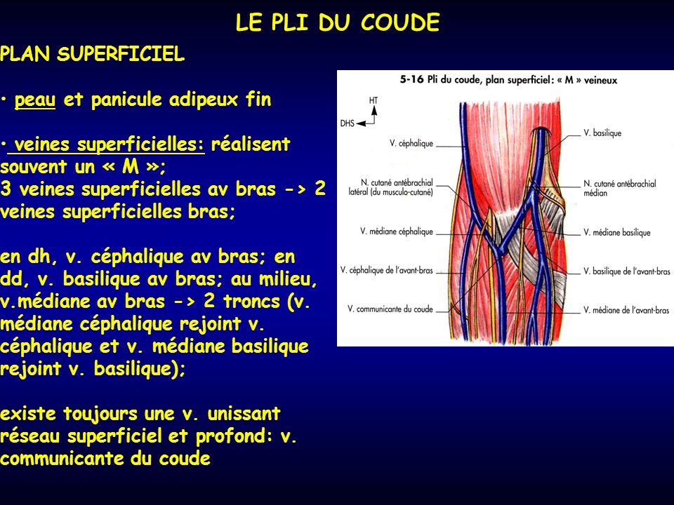 LE PLI DU COUDE PLAN SUPERFICIEL peau et panicule adipeux fin veines superficielles: réalisent souvent un « M »; 3 veines superficielles av bras -> 2 veines superficielles bras; en dh, v.