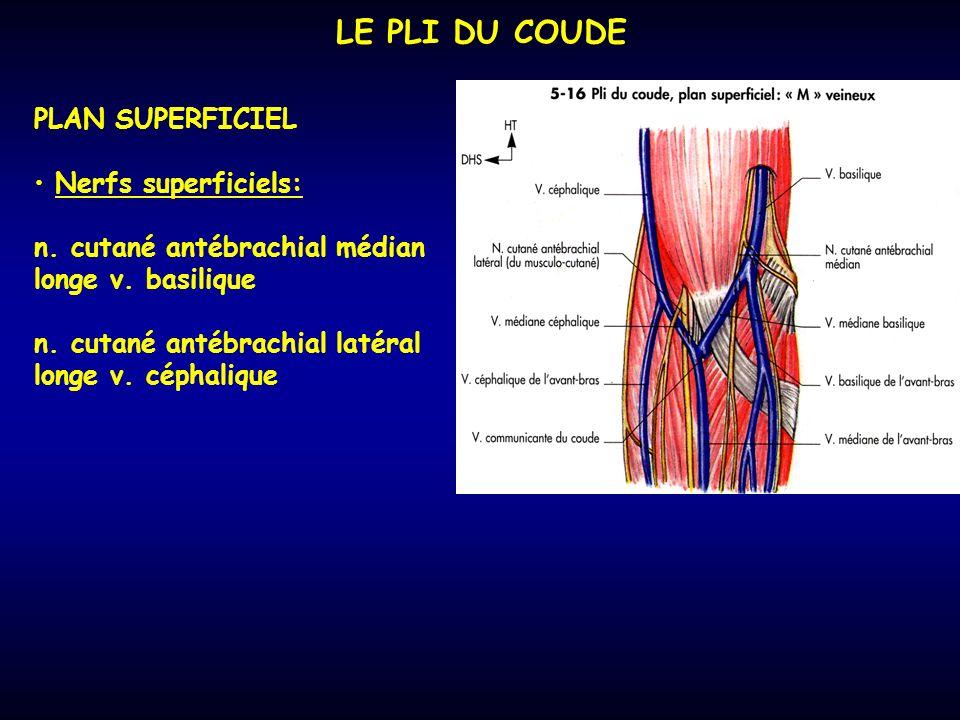 LE PLI DU COUDE PLAN SUPERFICIEL Nerfs superficiels: n.