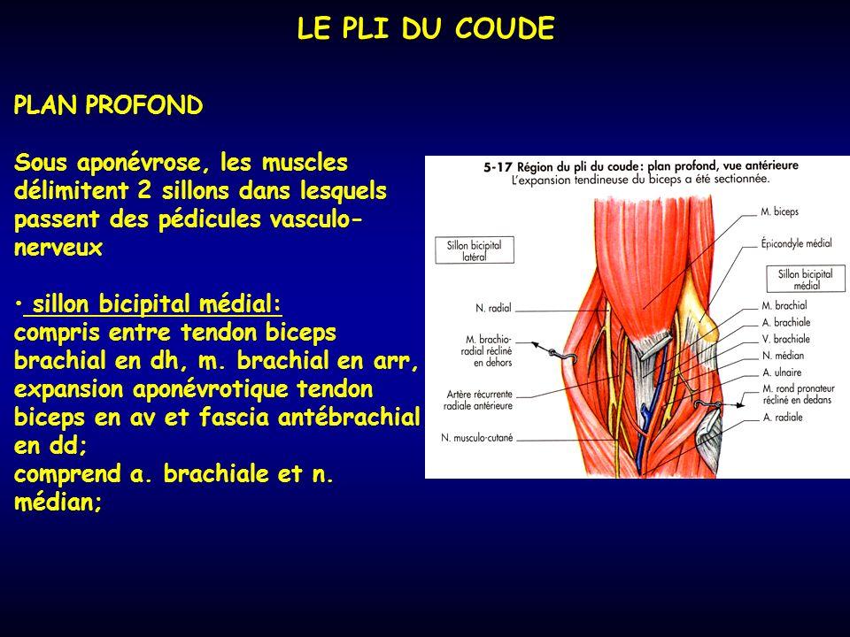 LE PLI DU COUDE PLAN PROFOND Sous aponévrose, les muscles délimitent 2 sillons dans lesquels passent des pédicules vasculo- nerveux sillon bicipital médial: compris entre tendon biceps brachial en dh, m.