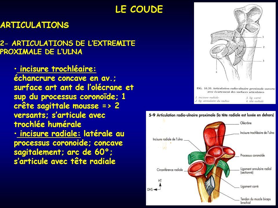 LE COUDE ARTICULATIONS 2- ARTICULATIONS DE LEXTREMITE PROXIMALE DE LULNA incisure trochléaire: échancrure concave en av.; surface art ant de lolécrane et sup du processus coronoïde; 1 crête sagittale mousse => 2 versants; sarticule avec trochlée humérale incisure radiale: latérale au processus coronoide; concave sagitalement; arc de 60°; sarticule avec tête radiale