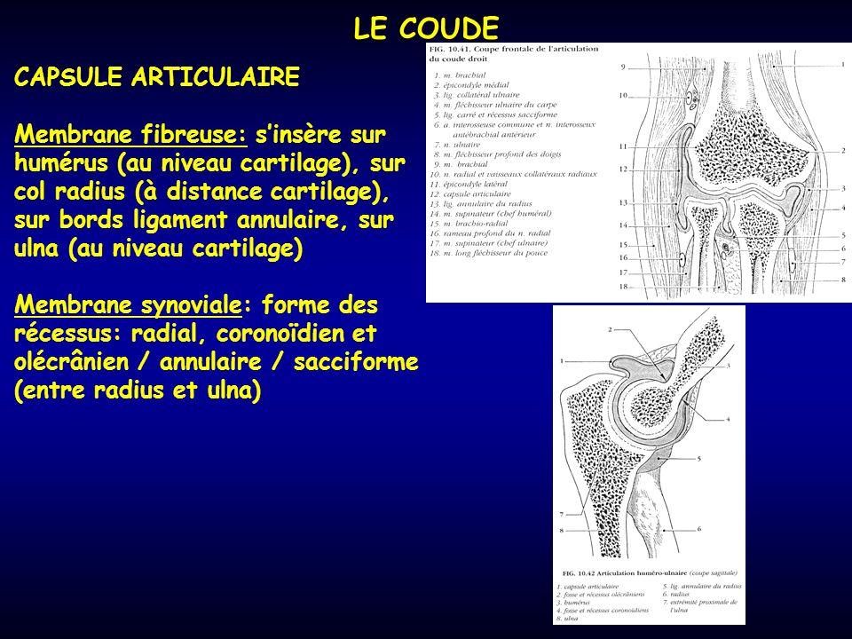 LE COUDE CAPSULE ARTICULAIRE Membrane fibreuse: sinsère sur humérus (au niveau cartilage), sur col radius (à distance cartilage), sur bords ligament annulaire, sur ulna (au niveau cartilage) Membrane synoviale: forme des récessus: radial, coronoïdien et olécrânien / annulaire / sacciforme (entre radius et ulna)
