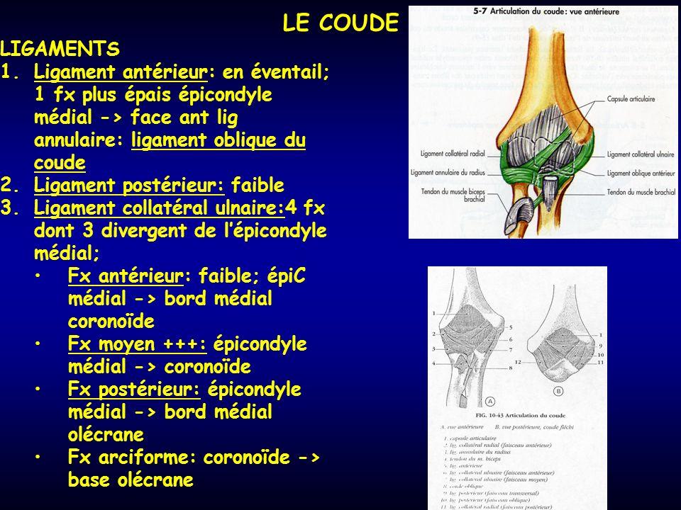 LE COUDE LIGAMENTS 1.Ligament antérieur: en éventail; 1 fx plus épais épicondyle médial -> face ant lig annulaire: ligament oblique du coude 2.Ligament postérieur: faible 3.Ligament collatéral ulnaire:4 fx dont 3 divergent de lépicondyle médial; Fx antérieur: faible; épiC médial -> bord médial coronoïde Fx moyen +++: épicondyle médial -> coronoïde Fx postérieur: épicondyle médial -> bord médial olécrane Fx arciforme: coronoïde -> base olécrane