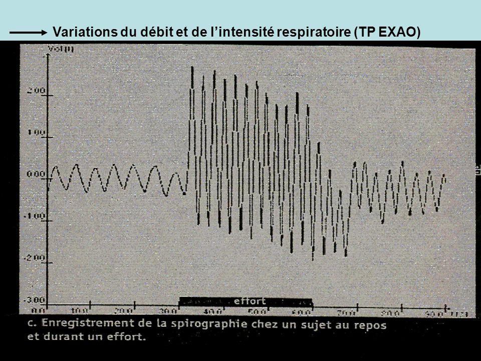 Variations du débit et de lintensité respiratoire (TP EXAO)