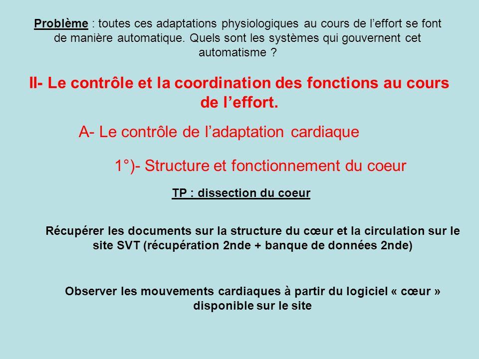 II- Le contrôle et la coordination des fonctions au cours de leffort. Problème : toutes ces adaptations physiologiques au cours de leffort se font de