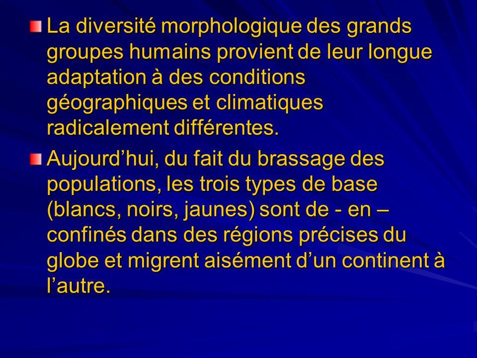 La diversité morphologique des grands groupes humains provient de leur longue adaptation à des conditions géographiques et climatiques radicalement di