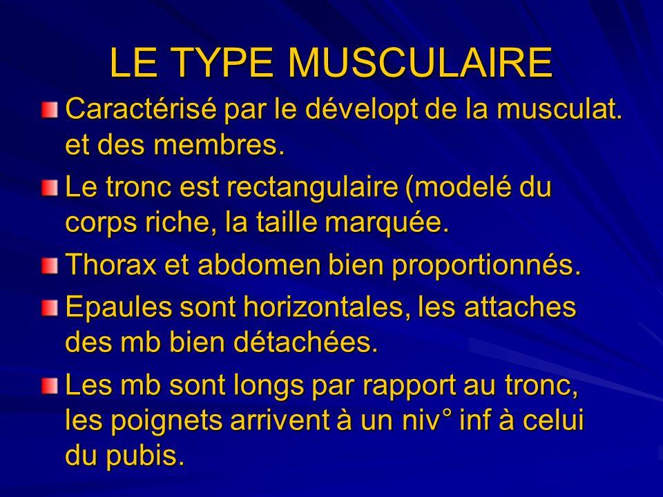 LE TYPE MUSCULAIRE Caractérisé par le dévelopt de la musculat. et des membres. Le tronc est rectangulaire (modelé du corps riche, la taille marquée. T
