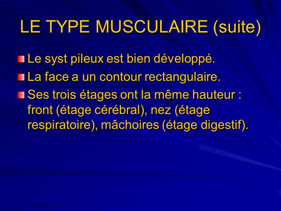 LE TYPE MUSCULAIRE (suite) Le syst pileux est bien développé. La face a un contour rectangulaire. Ses trois étages ont la même hauteur : front (étage