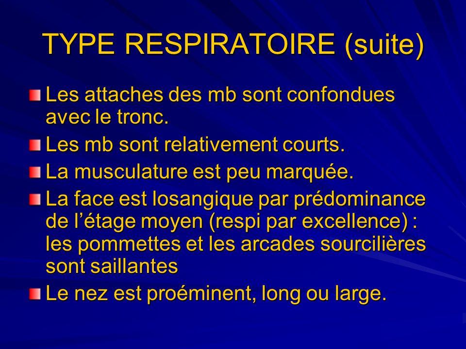 TYPE RESPIRATOIRE (suite) Les attaches des mb sont confondues avec le tronc. Les mb sont relativement courts. La musculature est peu marquée. La face