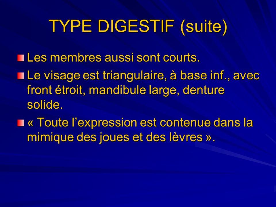 TYPE DIGESTIF (suite) Les membres aussi sont courts. Le visage est triangulaire, à base inf., avec front étroit, mandibule large, denture solide. « To