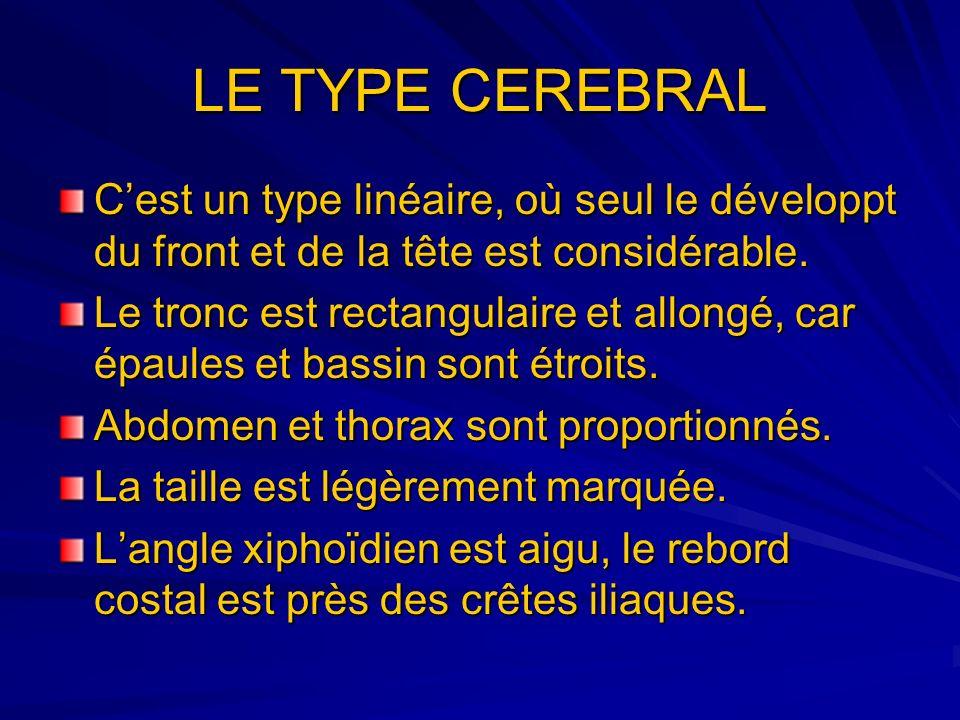 LE TYPE CEREBRAL Cest un type linéaire, où seul le développt du front et de la tête est considérable. Le tronc est rectangulaire et allongé, car épaul