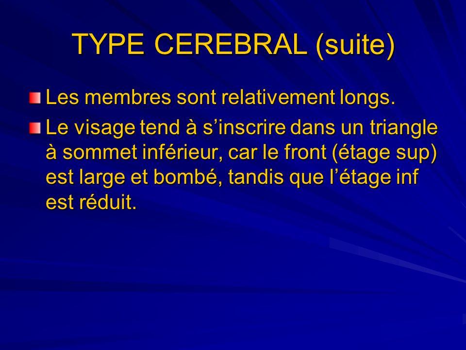 TYPE CEREBRAL (suite) Les membres sont relativement longs. Le visage tend à sinscrire dans un triangle à sommet inférieur, car le front (étage sup) es