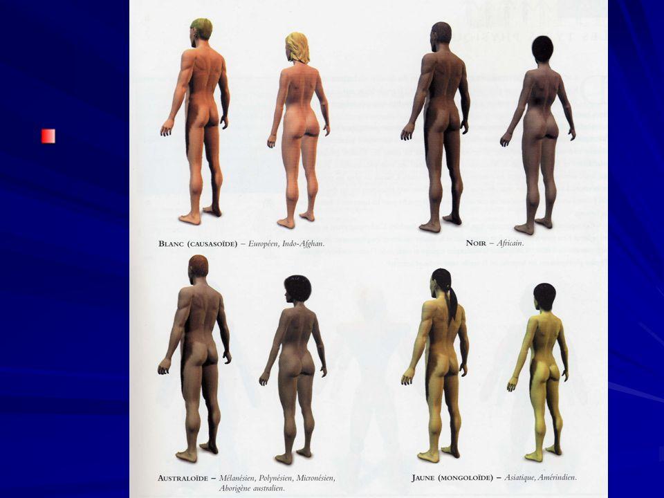 Les types physiques De tout temps on a tenté de classer les hommes selon leur type physique.