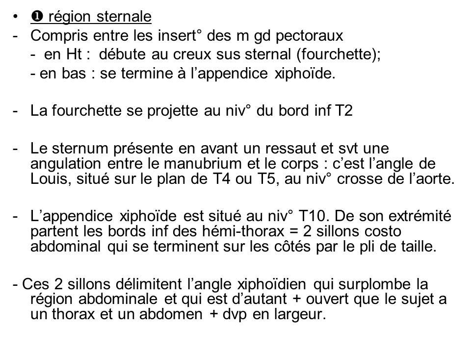 région sternale -Compris entre les insert° des m gd pectoraux - en Ht : débute au creux sus sternal (fourchette); - en bas : se termine à lappendice xiphoïde.