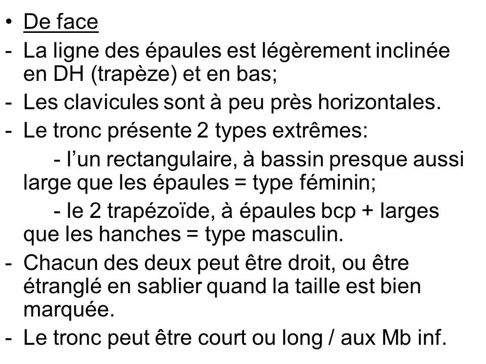 ASPECT POSTERIEUR DU TRONC 1.Morphologie thoracique 2.