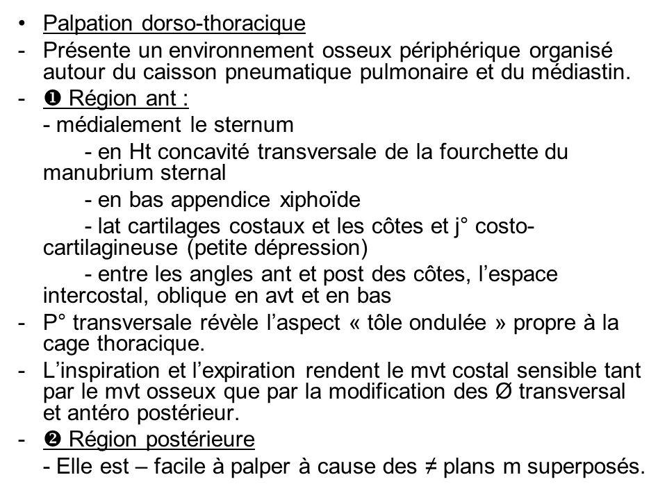 Palpation dorso-thoracique -Présente un environnement osseux périphérique organisé autour du caisson pneumatique pulmonaire et du médiastin.