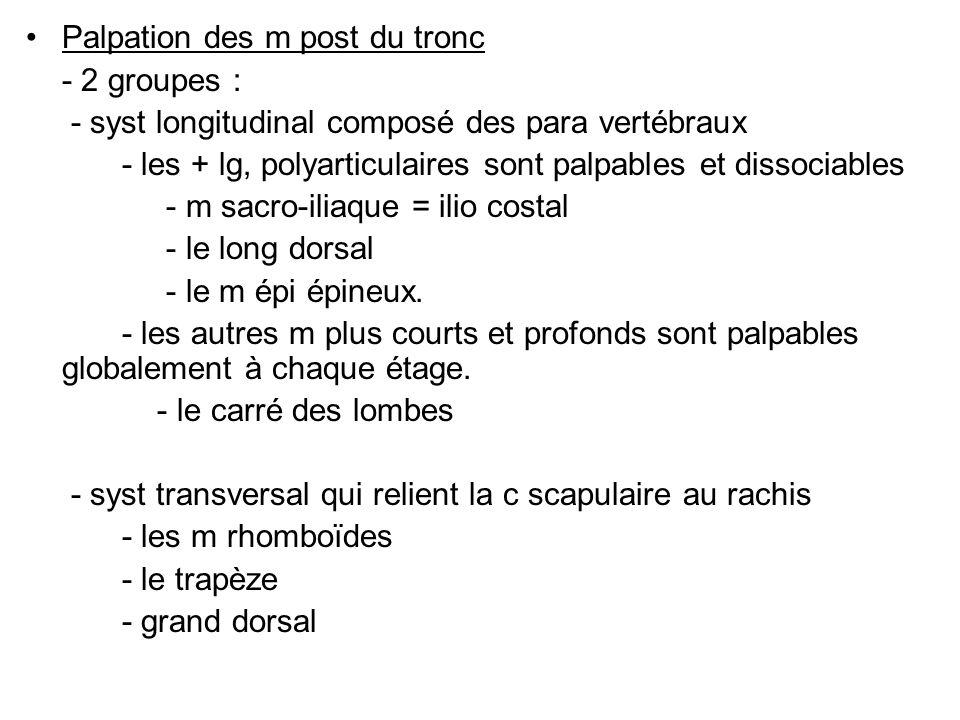 Palpation des m post du tronc - 2 groupes : - syst longitudinal composé des para vertébraux - les + lg, polyarticulaires sont palpables et dissociables - m sacro-iliaque = ilio costal - le long dorsal - le m épi épineux.