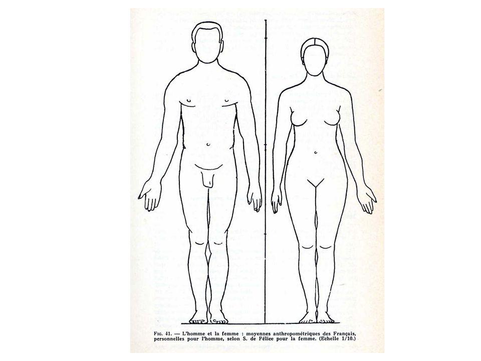Les membres inférieurs sont normalement en contact par 5 points quand le sujet est en position bien droite : - talons; - malléoles médiales (int); - mollets; - genoux; - et haut des cuisses.