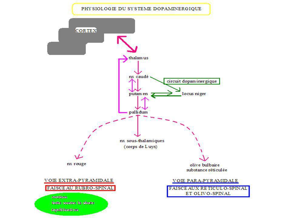 EVOLUTION DE LA MALADIE La maladie de Parkinson est une maladie qui évolue sur une très grande période.