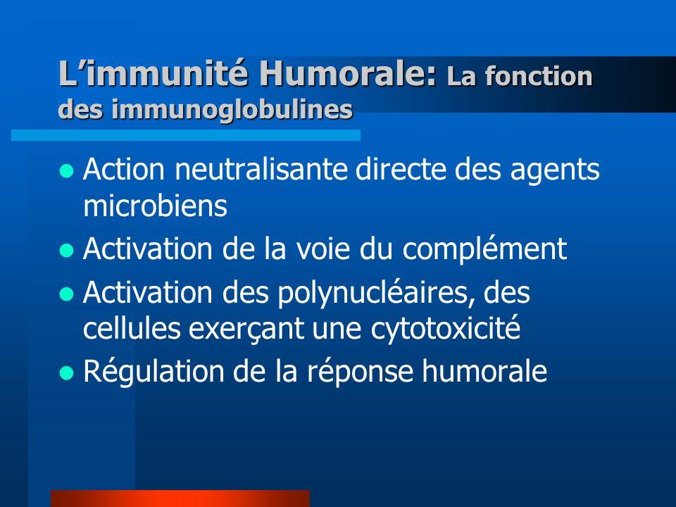 Limmunité Humorale: La fonction des immunoglobulines Action neutralisante directe des agents microbiens Activation de la voie du complément Activation des polynucléaires, des cellules exerçant une cytotoxicité Régulation de la réponse humorale
