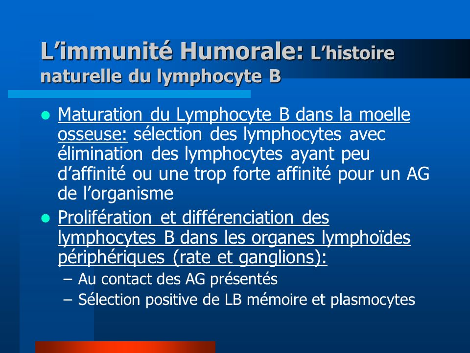Limmunité Humorale: Lhistoire naturelle du lymphocyte B Maturation du Lymphocyte B dans la moelle osseuse: sélection des lymphocytes avec élimination des lymphocytes ayant peu daffinité ou une trop forte affinité pour un AG de lorganisme Prolifération et différenciation des lymphocytes B dans les organes lymphoïdes périphériques (rate et ganglions): –Au contact des AG présentés –Sélection positive de LB mémoire et plasmocytes