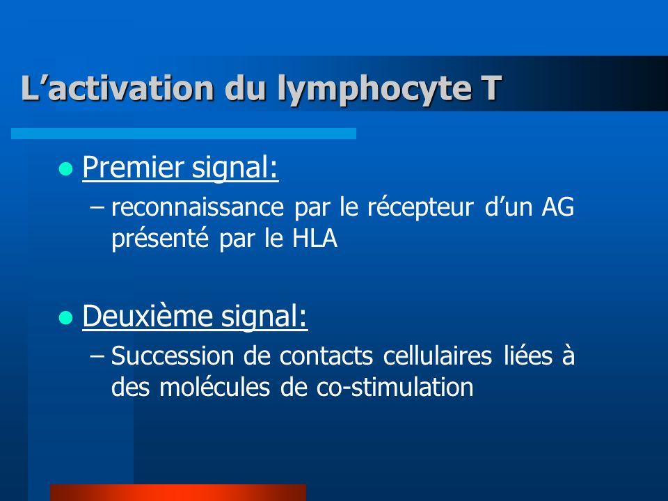 Lactivation du lymphocyte T Premier signal: –reconnaissance par le récepteur dun AG présenté par le HLA Deuxième signal: –Succession de contacts cellulaires liées à des molécules de co-stimulation