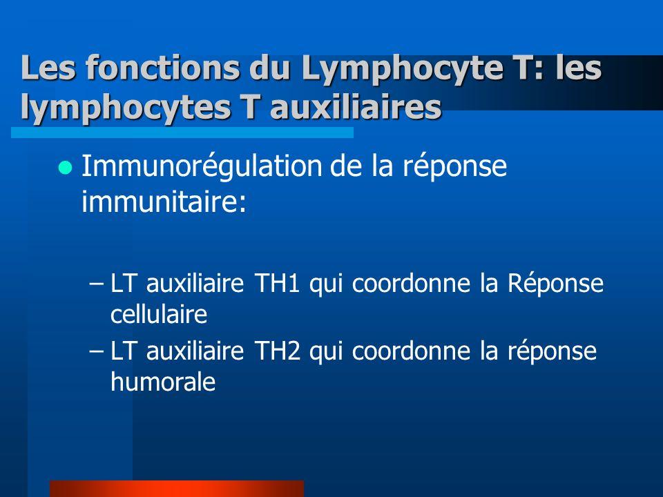 Les fonctions du Lymphocyte T: les lymphocytes T auxiliaires Immunorégulation de la réponse immunitaire: –LT auxiliaire TH1 qui coordonne la Réponse cellulaire –LT auxiliaire TH2 qui coordonne la réponse humorale