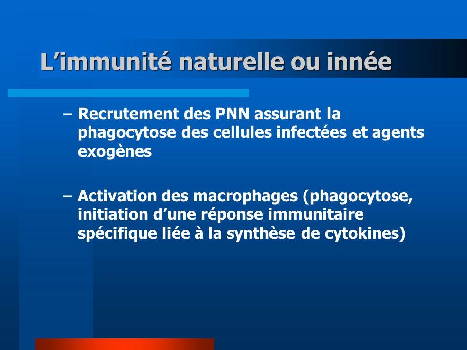 Limmunité naturelle ou innée –Recrutement des PNN assurant la phagocytose des cellules infectées et agents exogènes –Activation des macrophages (phago