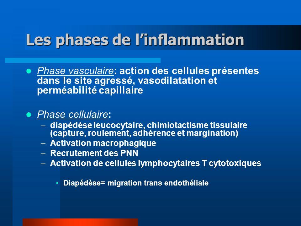 Les phases de linflammation Phase vasculaire: action des cellules présentes dans le site agressé, vasodilatation et perméabilité capillaire Phase cell