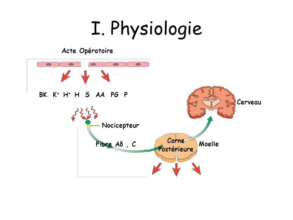 Cerveau Moelle Corne Postérieure Nocicepteur Acte Opératoire BK K + H + H S AA PG P I. Physiologie Fibre Aδ, C