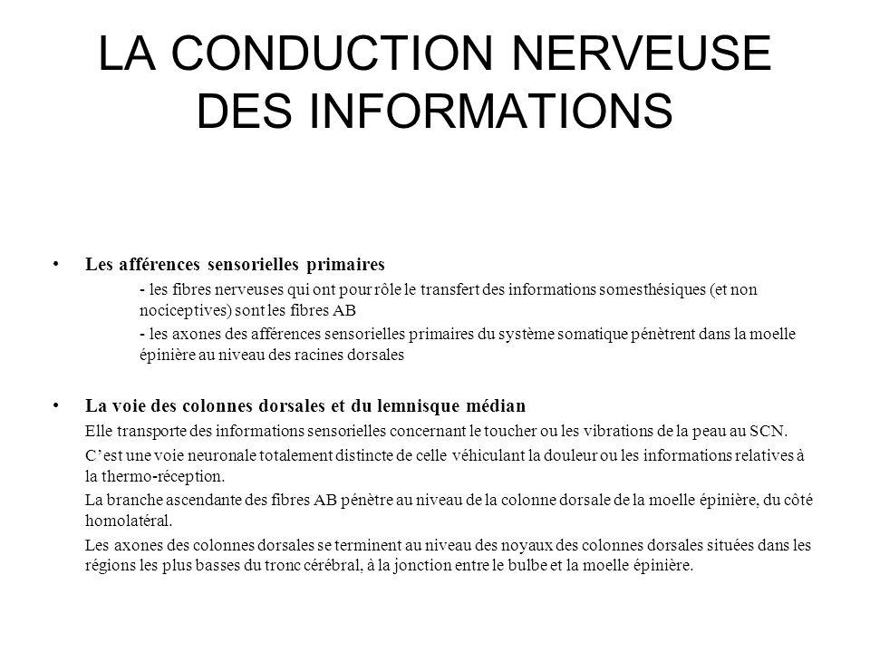 LA CONDUCTION NERVEUSE DES INFORMATIONS Les afférences sensorielles primaires - les fibres nerveuses qui ont pour rôle le transfert des informations s