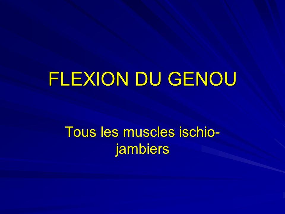 FLEXION DU GENOU Tous les muscles ischio- jambiers